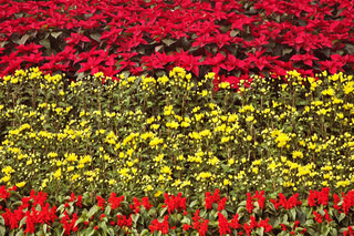 Magnificent bright multi-colour flower bed in the park