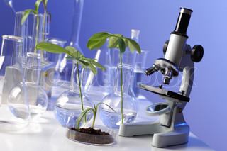 Green plants in biology laborotary