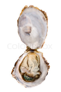 Opened oyster on white background