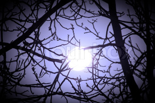 Real bright full moon behind some tree branches