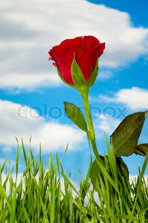 Red rose and clouds