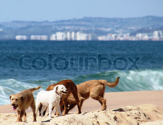 Sesimbra, Lagoa de Albufeira, dog, dogs, pack, pack of dogs, beach