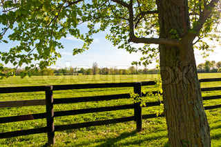 Country Scenery. Green pastures of horse farms.