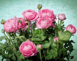 bouquet of spring flowers pink ranunculus