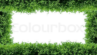 Animated green frame with hedge elements
