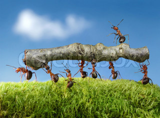 team of ants carry log with chief on it, teamwork