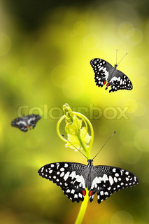 Butterfly resting on a young plant with few others