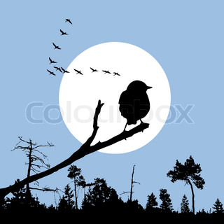 bird on branch silhouette on solar background