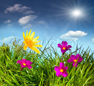 Blooming meadow under blue sky with clouds