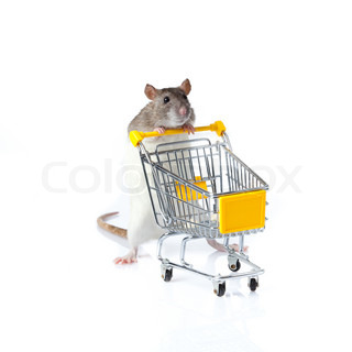rat and the shopping cart a rat with a basket