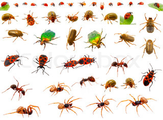 Insects : ladybug, may-bug, cockchafer, ant, spider, firebug and colorado potato beetle