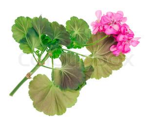 Billede af 'smuk, isoleret, grøn'