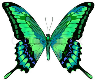Vector illustration of beautiful blue green butterflyisolated on white background