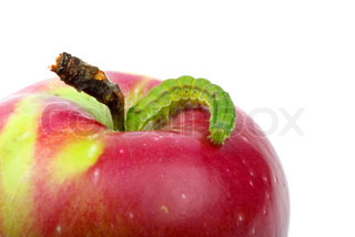 Big green worm crawling over red apple