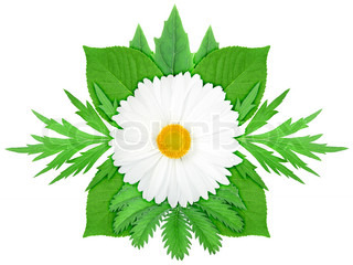 White flower with green leaf