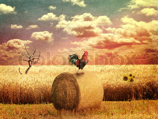 Grunge Country Landscape With Wheat Field