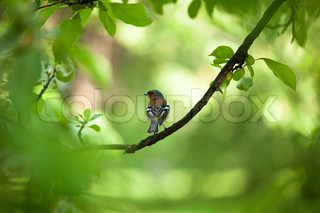 Small birdie on a branch surrounded with foliage