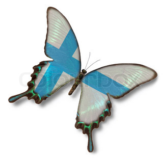 Finland flag on butterfly isolated on white