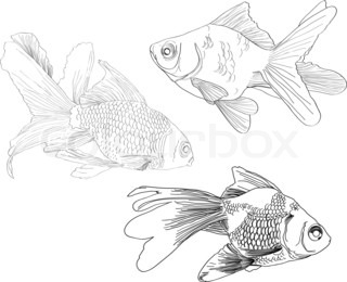 Hand drawing gold fishes