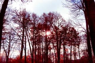 Fall Wallpaper Woods Landscape