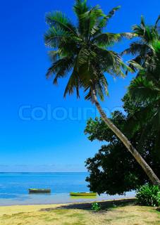 Sea Coconut Sunshine