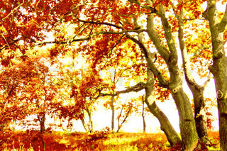 Leaves and Branches Fall Wallpaper