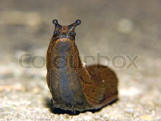 Billede af 'Slug, biodiversitet, sneglen'
