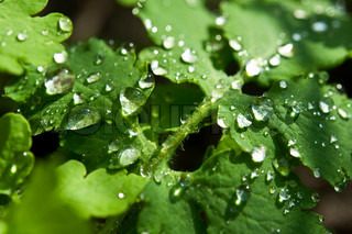 water drop on leaf background