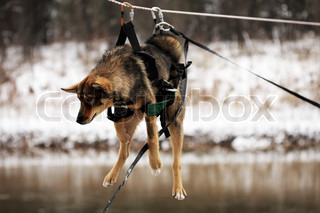 Dog tied up to the rope crossing the river