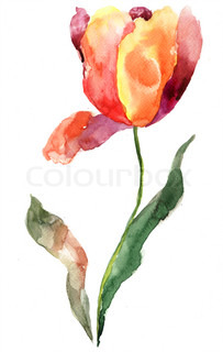 Watercolor illustration of Tulip flower