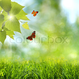 summer time abstract optimistic backgrounds with flying butterfly