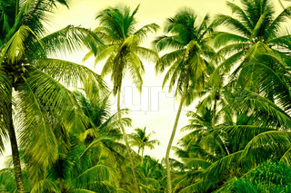 Jungle with palm trees