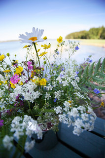 bunch of wildflowers in early morning light in front of lake