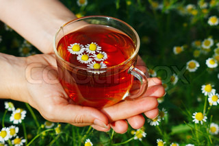 Hand with cup of herbal tea and chamomile