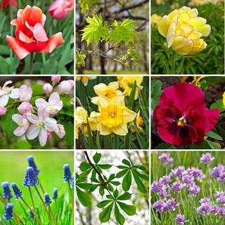 spring colors flowers collage