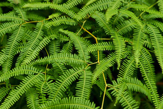 Fern in the nature
