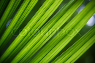 Exotic leaf in the sun