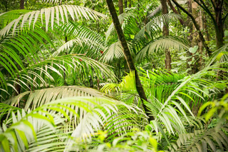 Jungle with fern