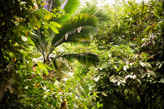 Tropical jungle with exotic plants