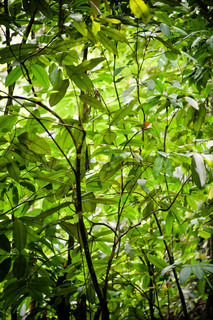 Rainforest with green plants