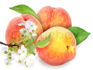 Heap of fresh orange peaches with green leaf and flowers Placed on white background Close-up Studio photography