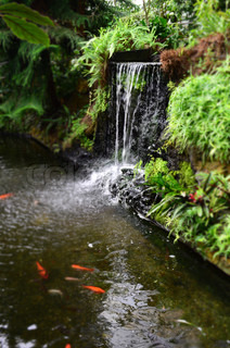 Goldfish Swimming In A Exotic Pond Underneath A Waterfall