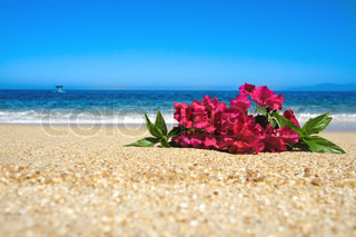 Tropical beach flowers laying in the sand with waves and blue sky in the background