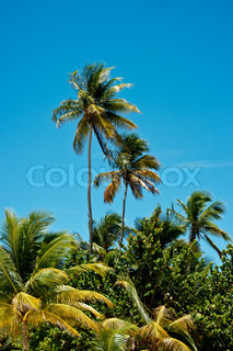 Jungle with tall palm trees