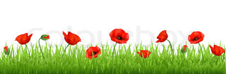Red Poppy Border