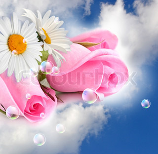 Pink roses and camomiles in the clouds