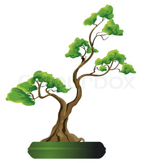 Bonsai tree vector illustration