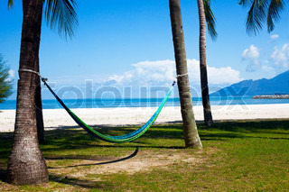 hammock on exotic tropical beach with palm trees