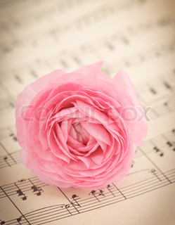 soft pink ranunculus flowers over book page