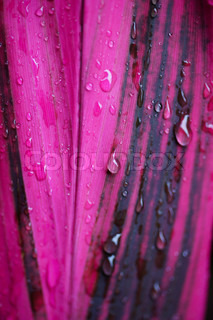Purple leaf with water drops